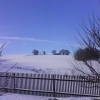 javorek-v-zime-1