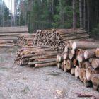 Těžba dřeva, les, dřevo