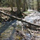 Bílý potok
