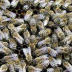Včelařská výstava Vůně medu - Nové Město na Moravě