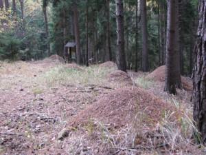 Cesta za Ferdou, aneb unikátní mravenčí rarita v Šebeni