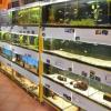 Cherra - akvaristika, chovatelské potřeby Žďár nad Sázavou
