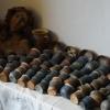 keramika-bara-zdar-nad-sazavou-keramicke-hrncirske-prace-07