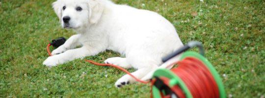Zahrada a pes