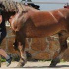 Den dětí u koní Žďár nad Sázavou