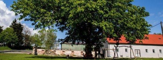 Cimrmanův kaštan ve Skleném bojuje o titul Strom roku 2016