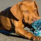 Poplatek za žďárské psy je splatný do konce srpna