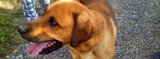Útulek pro opuštěné psy Žďár nad Sázavou