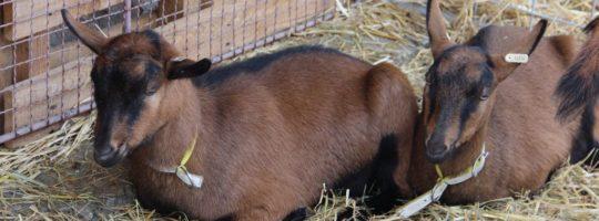 Při chovatelské výstavě se představí na tři tisíce zvířat