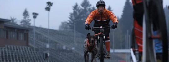 Do Vysočina Areny se sjedou závodníci se psy z celé Evropy