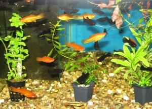 Cherra - akvaristika, chovatelské potřeby