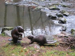 Dřevění bobři u Chrudimky