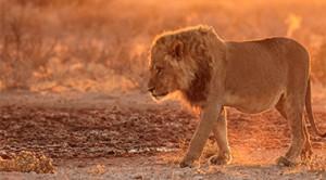 Srdce Kalahari