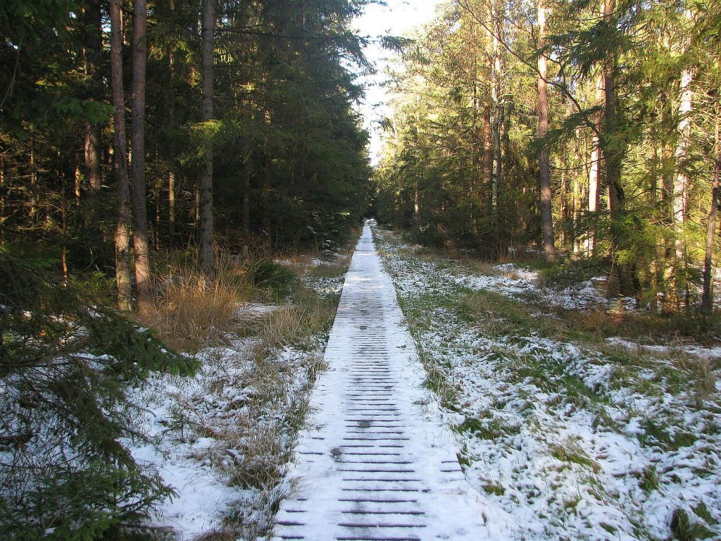 Naučnou stezkou severskou přírodou kolem Velkého Dářka