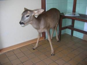 veterinarni-ordinace-hamry-nad-sazavou-2